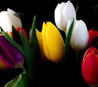 Обои на телефон тюльпаны, цветы, природа, листья, боке