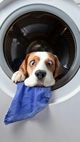 Обои на телефон юмор, собаки, машина, забавные, животные, washing