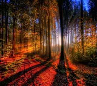 Обои на телефон природа, осень, лес, дерево, hd