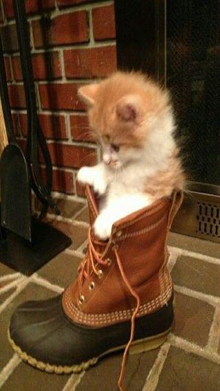 Обои на телефон обувь, кошки, животные, cat in the shoe