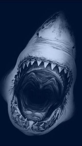 Обои на телефон акула, fgsd