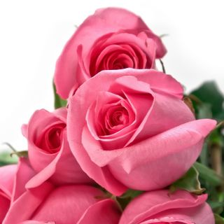 Обои на телефон друг, розы, прекрасные, мой, for my friend