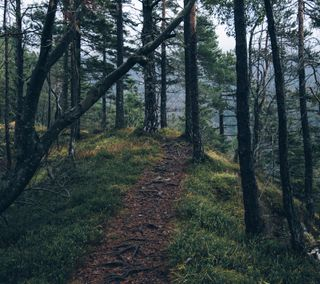 Обои на телефон путь, на улице, дерево, природа, лес, zarborday, forest path, earthporn