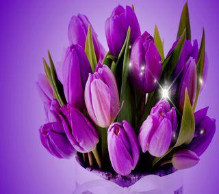 Обои на телефон тюльпаны, фиолетовые, приятные, природа, крутые