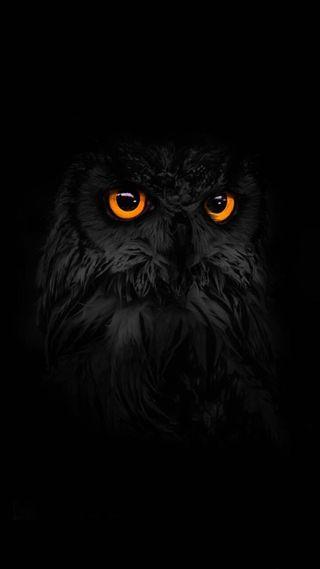 Обои на телефон темные, сова, свет, природа, питомцы, животные, глаза, галактика, андроид, ios, galaxy, android