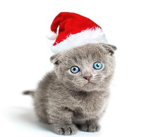 Обои на телефон санта, рождество, милые, кошки, котята