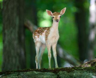 Обои на телефон олень, милые, малыш, лес