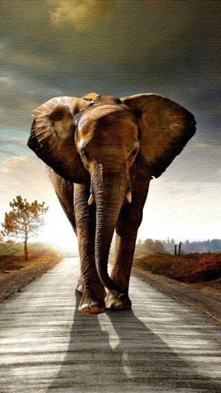 Обои на телефон слон, лес, животные, джунгли, fauna