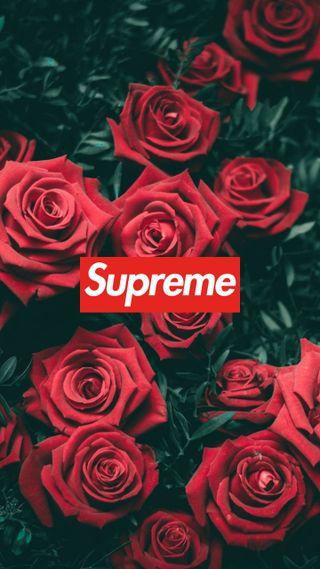 Обои на телефон розы, supreme