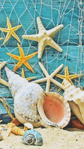 Обои на телефон цветные, раковина, песок, морской берег, море