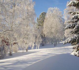 Обои на телефон холод, природа, зима, cold winter 3