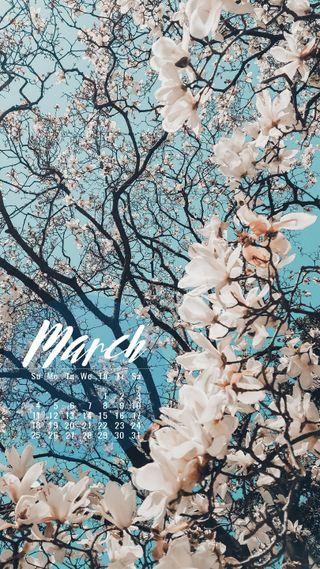 Обои на телефон расцветает, продуктивность, календарь, март, календари, march blossoms