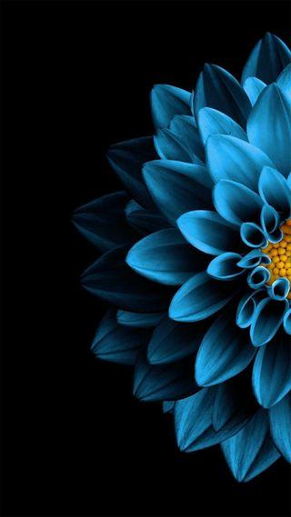 Обои на телефон эпл, цветы, синие, лотус, apple