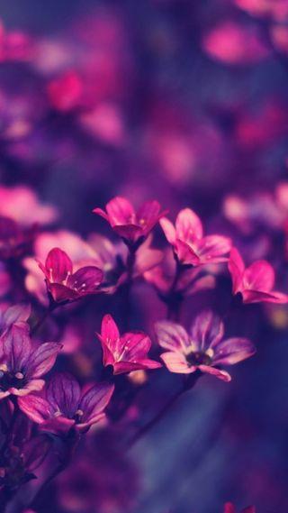 Обои на телефон цветы, розы