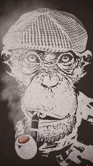 Обои на телефон обезьяны, the philosopher, philosopher