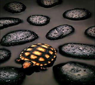 Обои на телефон черепаха, рокки, природа, последние, новый, милые, любовь, крутые, андроид, turtle hd, love, android, 2012
