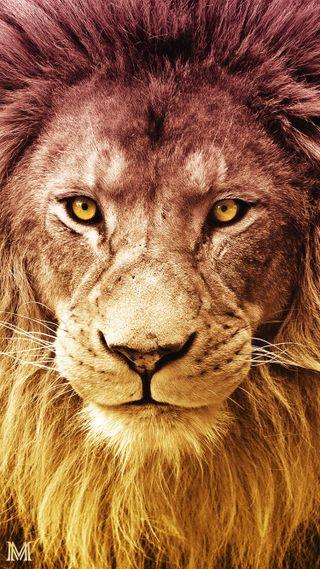 Обои на телефон чемпион, ультраслан, сари, лев, галатасарай, аслан, ttarena, hd, cimbom, aslan - lion