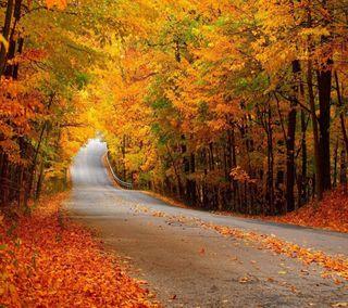 Обои на телефон путь, осень, autumn path, 2160x1920