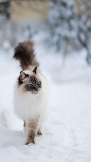 Обои на телефон отношение, снег, милые, кошки, котята, зима, snow cat