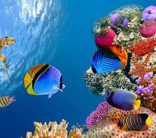 Обои на телефон яркие, черепаха, тропические, синие, рыба, природа, океан, море, мир, красочные, жизнь, вода, undersea world, swim