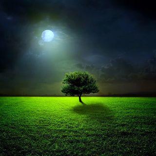 Обои на телефон поле, ночь, луна, дерево