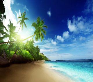 Обои на телефон берег, рай, пляж, пальмы, океан, дерево, вода