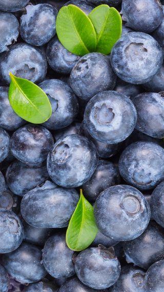 Обои на телефон ягоды, свежие, листья, blueberry