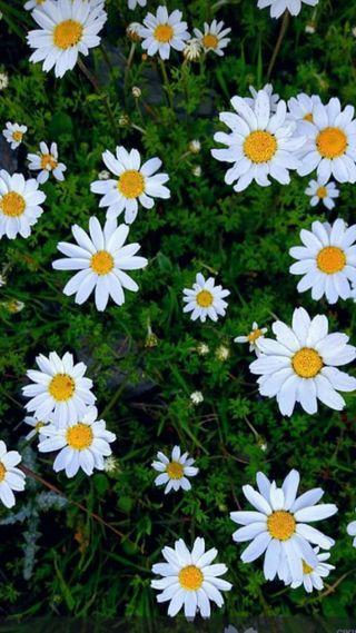 Обои на телефон фотографии, эмоджи, цветы, крутые, flovers