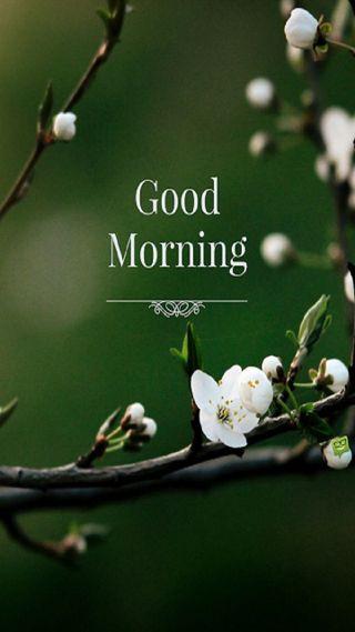 Обои на телефон цветы, утро, twig