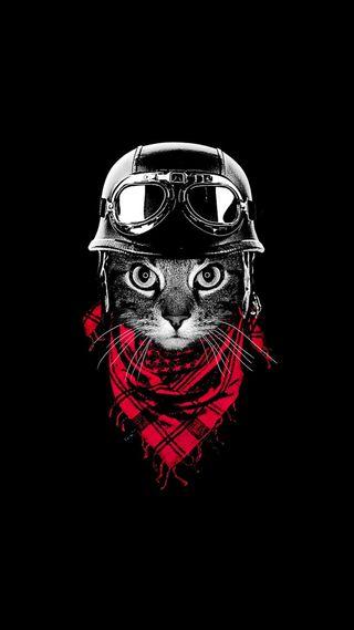 Обои на телефон рисунки, байкер, новый, милые, лучшие, крутые, кошки, коты, забавные, грани
