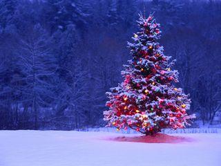 Обои на телефон огни, рождество, зима, дерево, arbol navidad