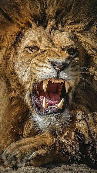 Обои на телефон пожар, лицо, лев, король, конг, звук, животные, land, del