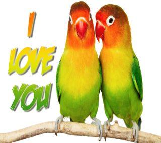 Обои на телефон попугай, птицы, милые, любовь, love birds, love