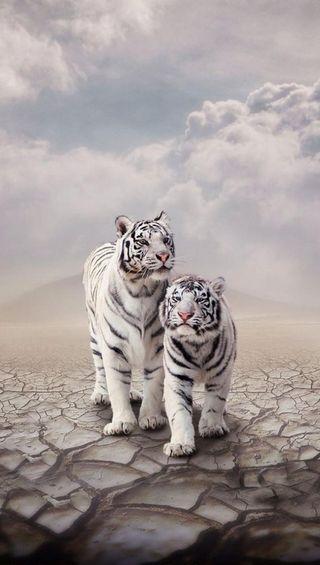 Обои на телефон тигр, животные, белые