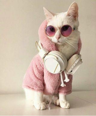Обои на телефон крутые, кошки, котята