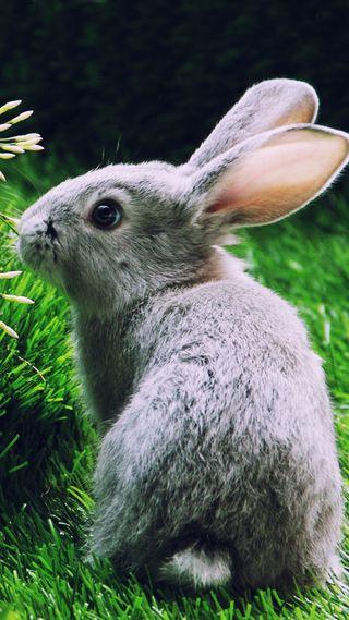 Обои на телефон кролики, серые, милые, любовь, кролик, love, hare