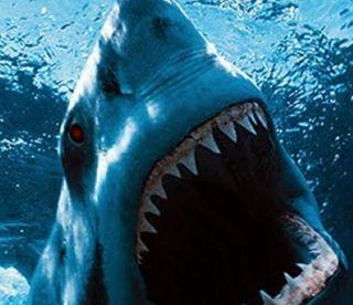 Обои на телефон акула, животные, bite