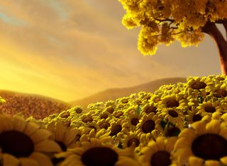 Обои на телефон подсолнухи, природа, мир, sunflower world