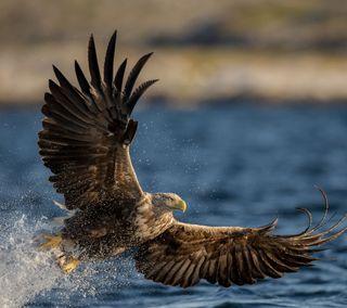 Обои на телефон орел, вода