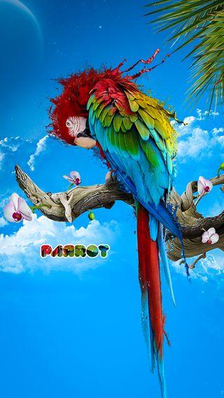 Обои на телефон попугай, синие, питомцы, животные