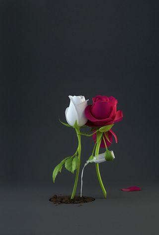 Обои на телефон чувства, цветы, розы, любовь, tenderness, sweetest, love