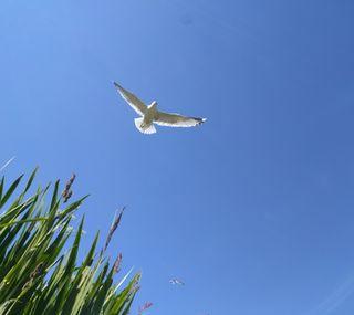 Обои на телефон трава, синие, птицы, природа, полет, небо, seagull flying over, seagull