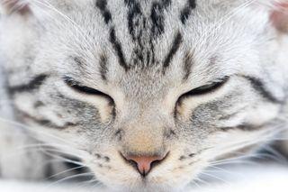 Обои на телефон лицо, кошки, котята, коты