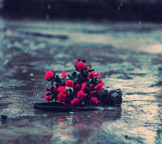 Обои на телефон камера, цветы, приятные, дождь
