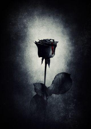 Обои на телефон черные, розы