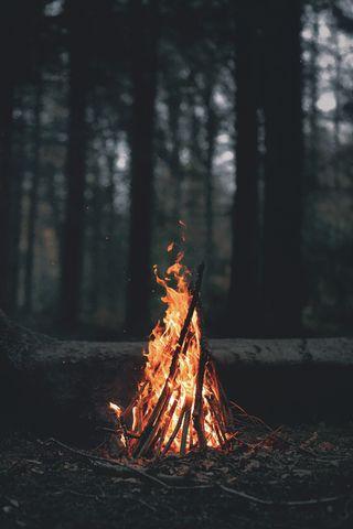 Обои на телефон пламя, природа, огонь, лес