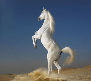 Обои на телефон лошадь, белые, white horse