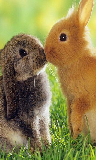 Обои на телефон кролики, поцелуй, навсегда, милые, любовь, вместе, love u, love, cute kiss