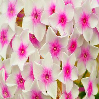 Обои на телефон лепестки, цветы, цвести, розовые, природа, милые, крутые, красота, good