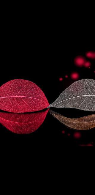 Обои на телефон красота, черные, листья, красые, боке